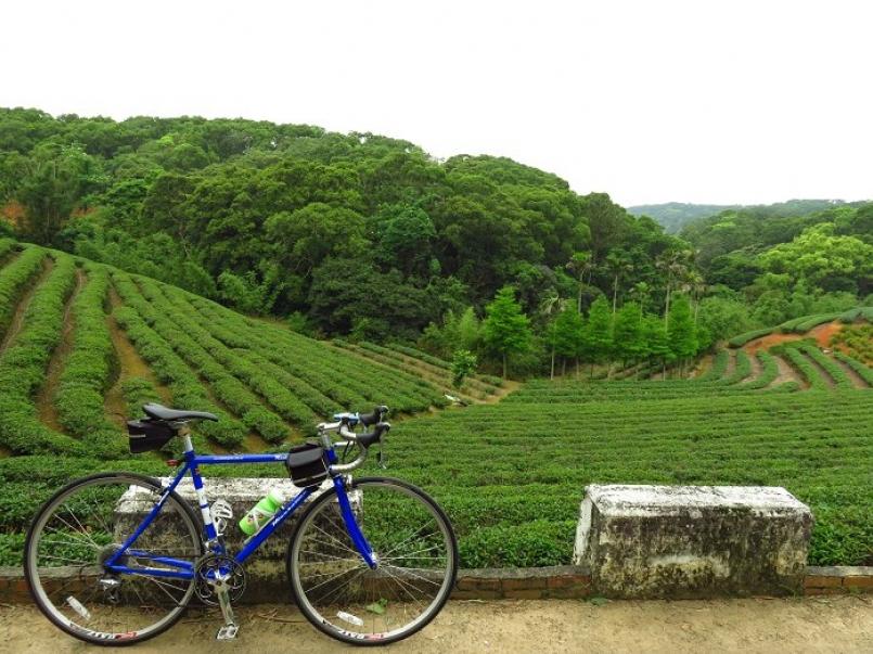【騎旅】騎單車漫遊到林口 貓尾崎茶田半天輕呼吸
