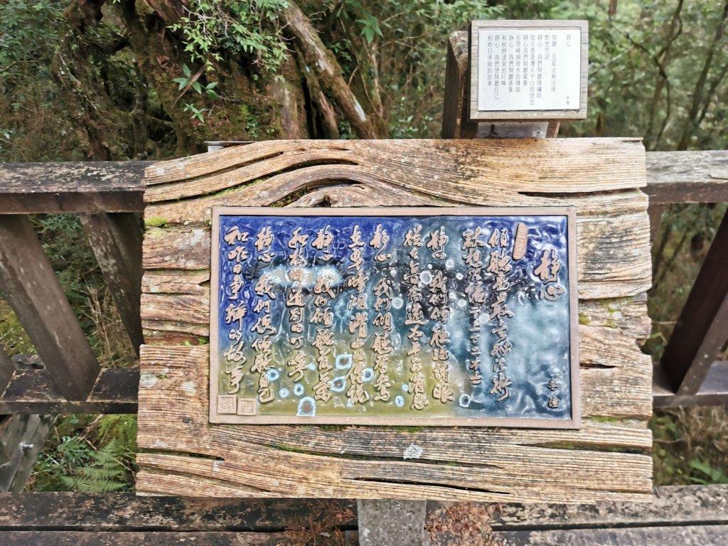 檜木原始林步道-倒臥的巨幹形成雙代木景觀_1040718
