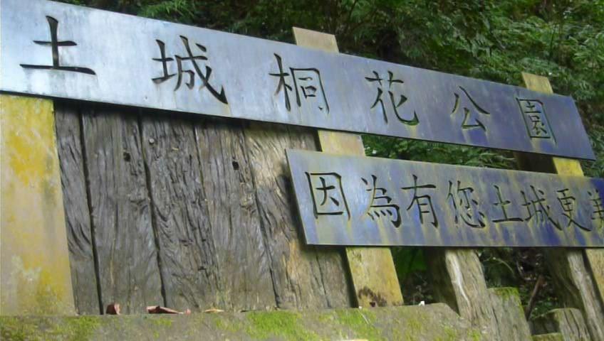 浪漫四月雪~土城桐花公園_1362443