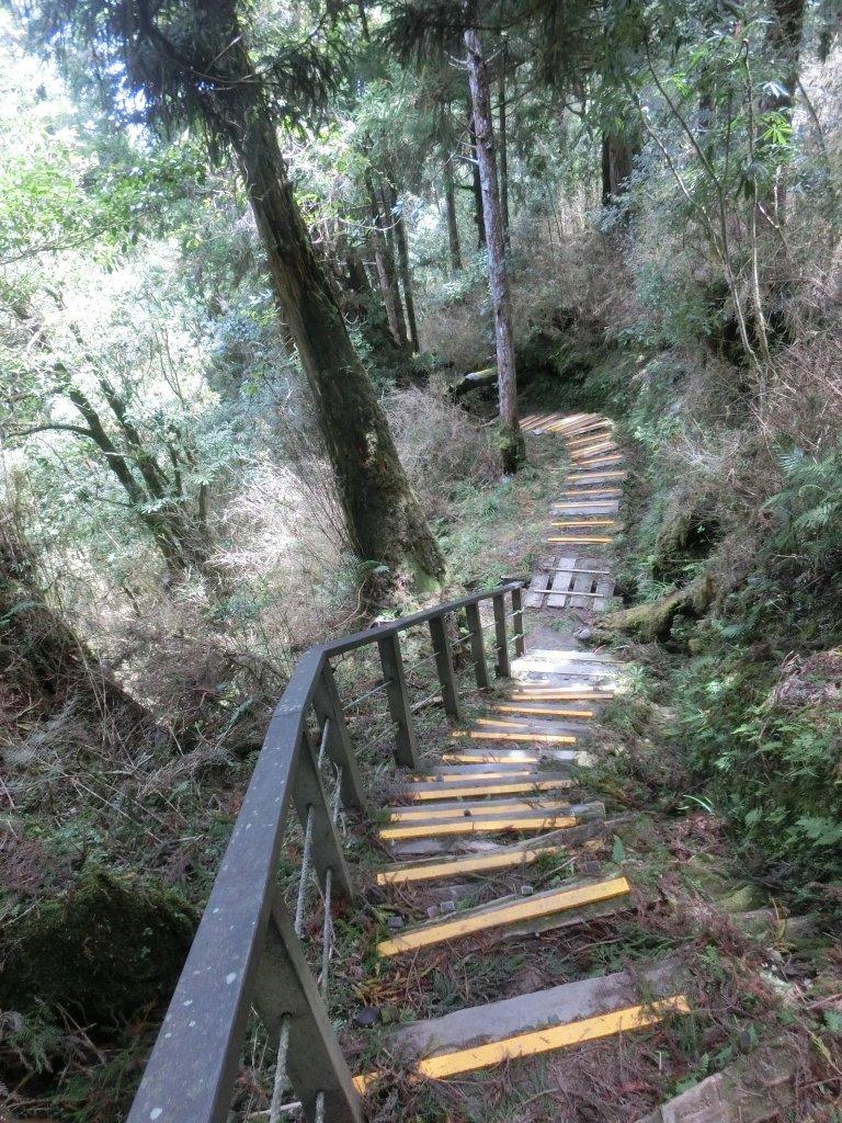 鐵杉林自然步道_672926