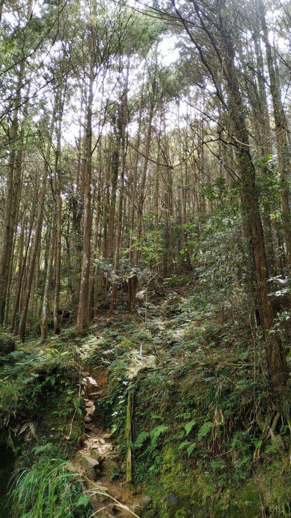一個人包場的水漾森林_704212