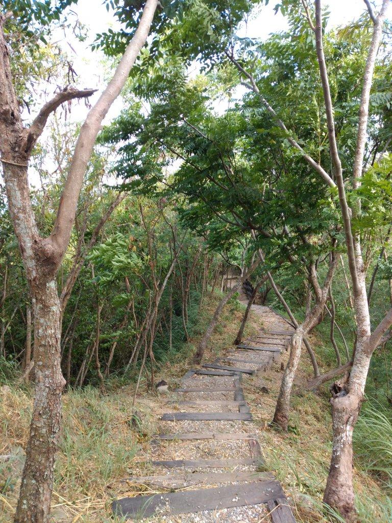 步道巡訪員 l 鯉魚山步道七月巡訪日誌_1050326