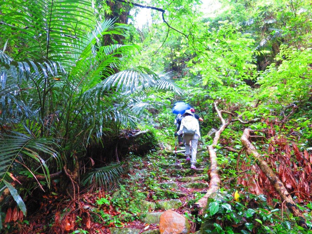 最美的步道名--德芙蘭生態步道_625103