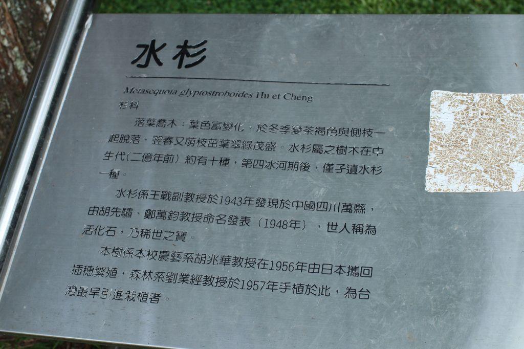 惠蓀林場步道_172006