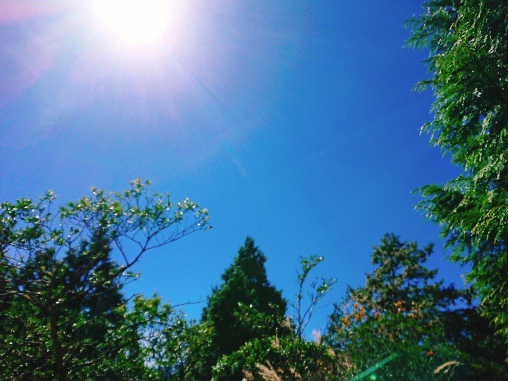 加羅湖--201902_531031