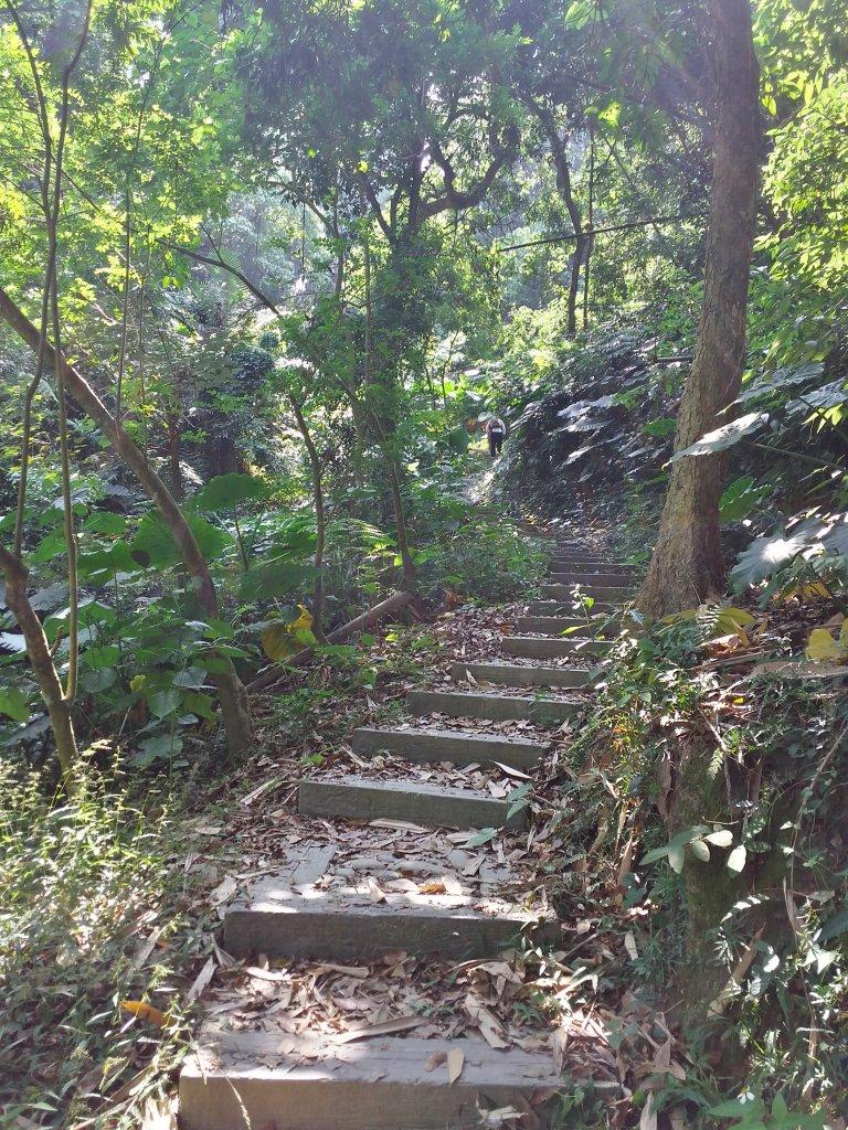 龍過脈森林步道_727924