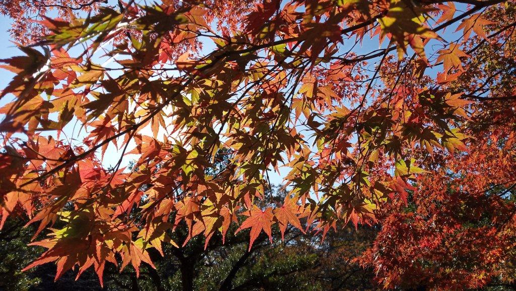 東京都澀谷區代々木公園_760990