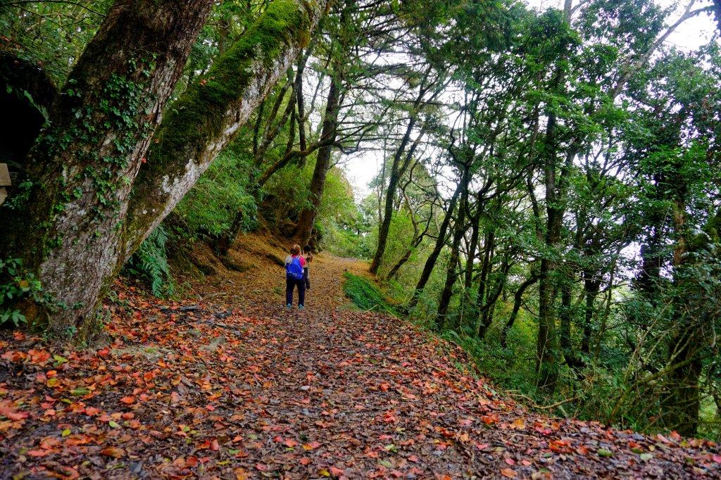 檜山巨木森林步道_481491