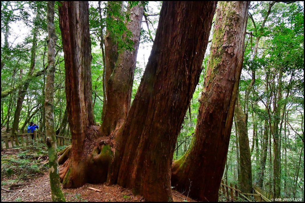 千年的對話~鎮西堡巨木森林 B區_234438