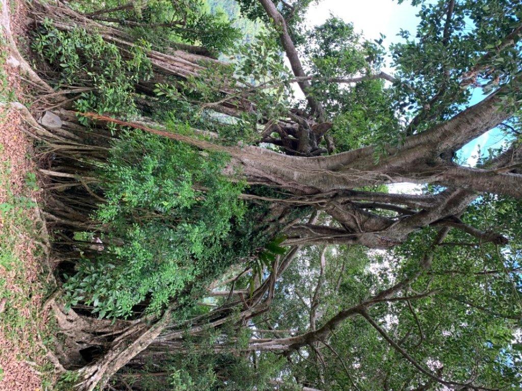 台東知本森林遊樂區之1088階好漢坡_1063304