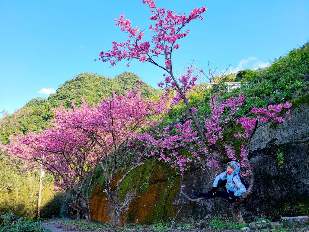 遇上櫻花季的直潭山_1252741