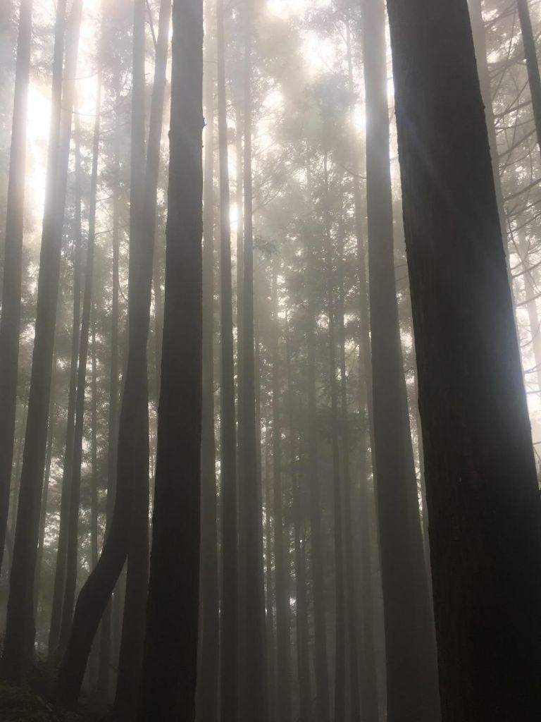觀霧檜山巨木森林步道_171723
