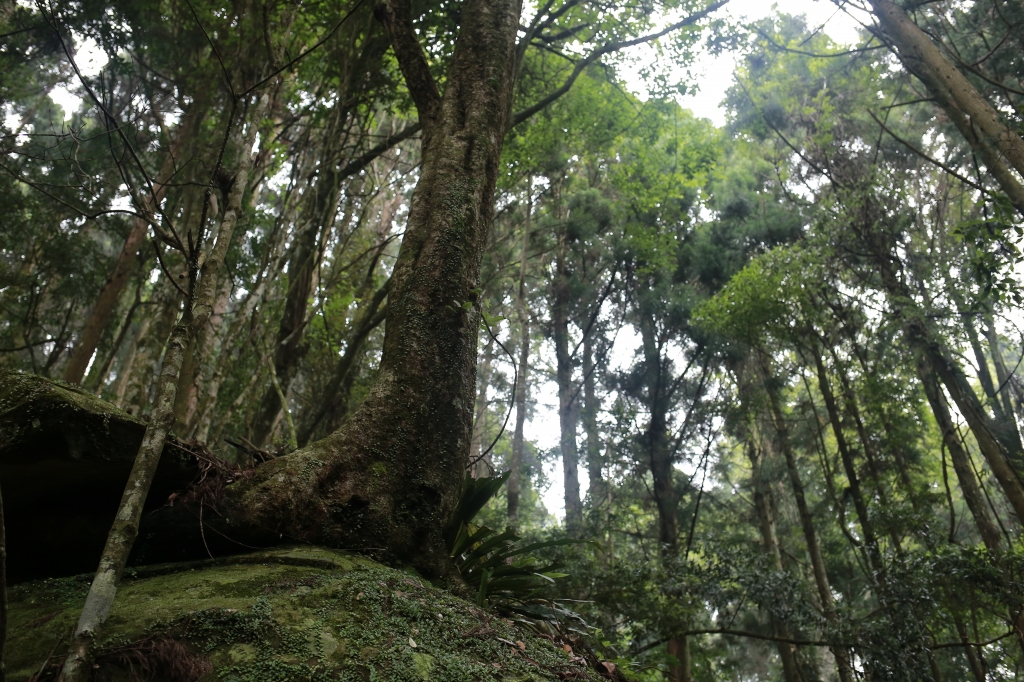 加里山:鹿場登山口_77810