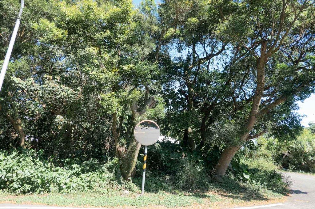 【台北大縱走第一段】輕鬆愜意的竹林與鄉村小徑_1362409