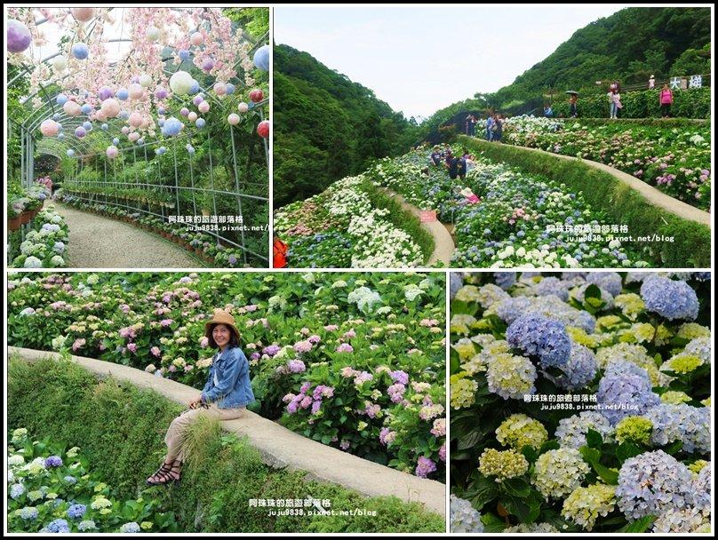 竹子湖繡球花季_594289