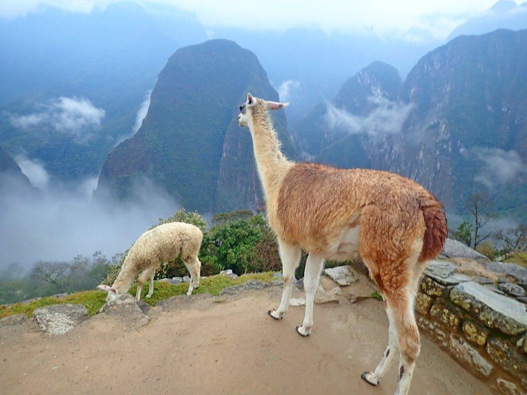 南美洲自助行—馬丘比丘、瓦納比丘 _706043
