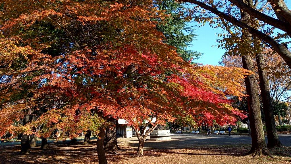 東京都練馬区光が丘公園_760717