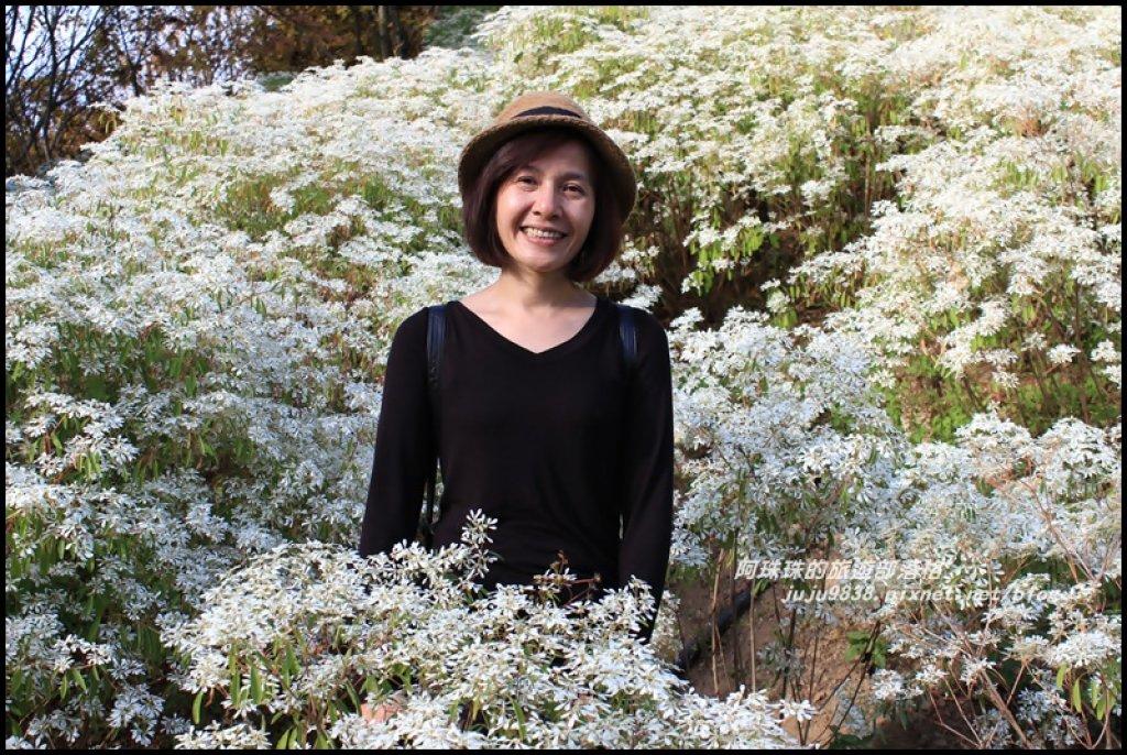 沐心泉冬季限定白雪木與黃金楓的浪漫相遇_481813