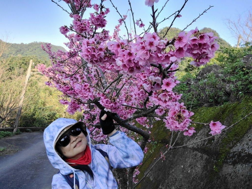 遇上櫻花季的直潭山_1252752