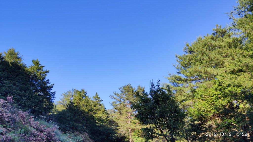大雪山神木&天池_715474