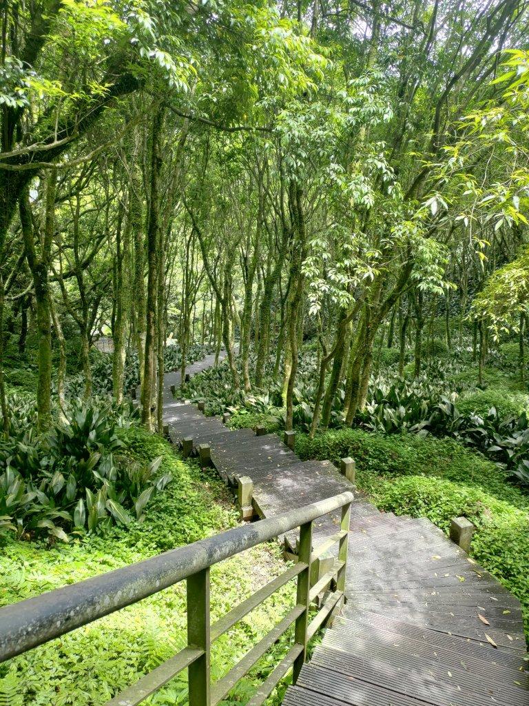 中正山步道-竹子湖來回_1361688