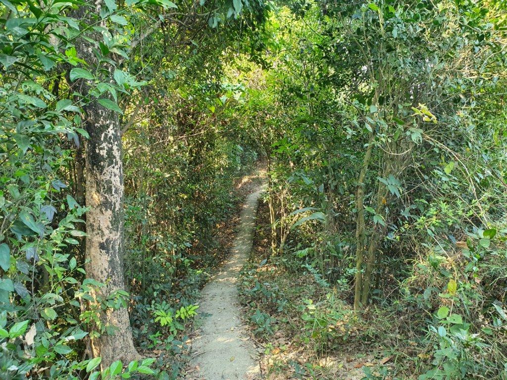 大社觀音山步道(小百岳)_1252607