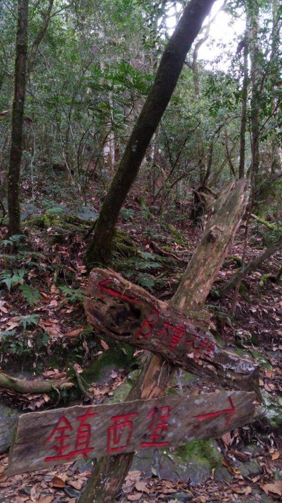 鎮西堡B區巨木群_1325616