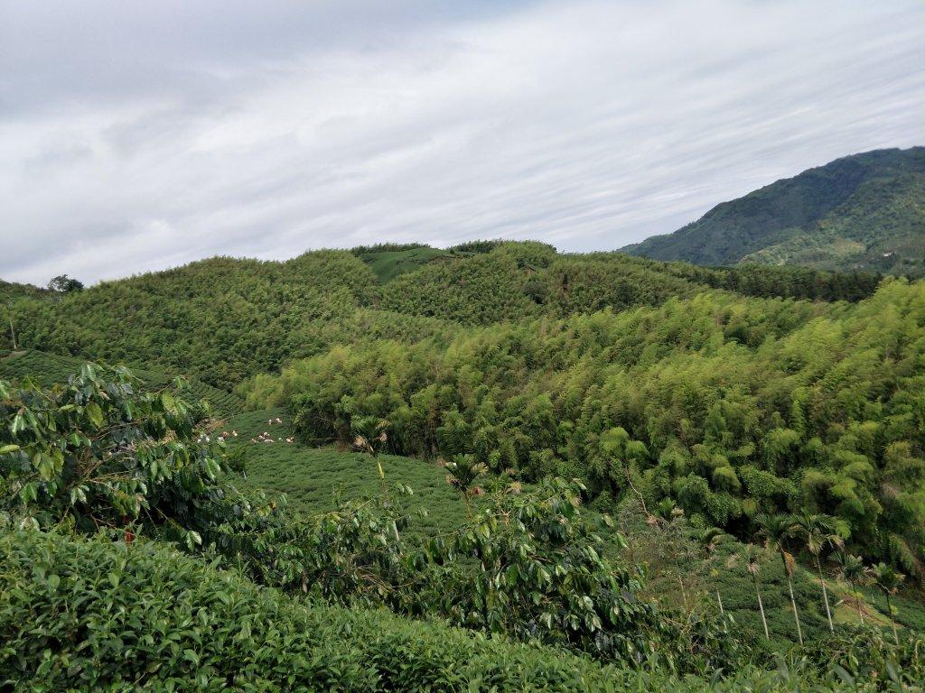交力坪山(佛綠山)20210505_1419539