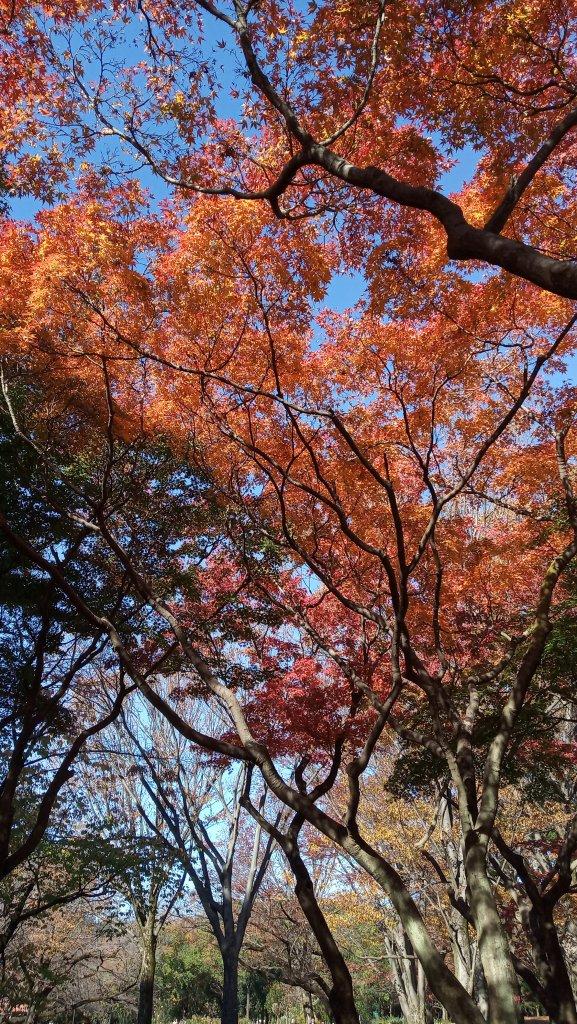 東京都澀谷區代々木公園_761031