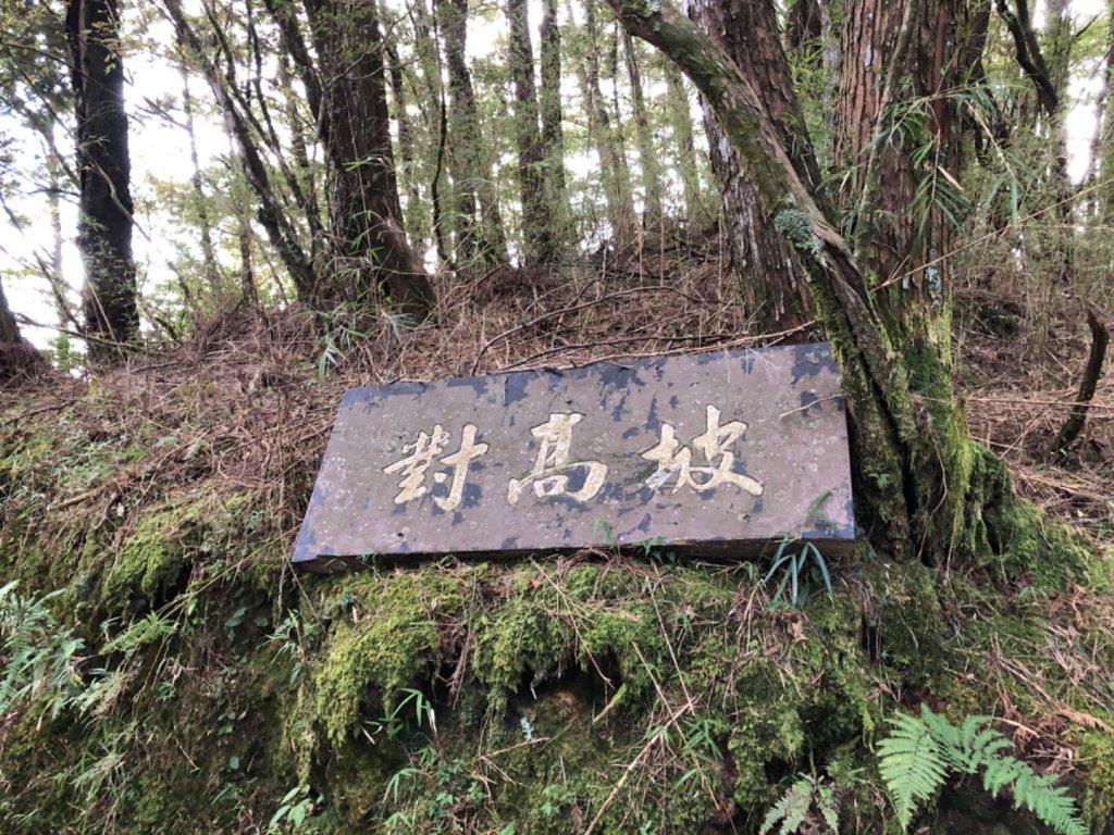 阿里山水山巨木、祝山觀日步道、對高岳步 _727004