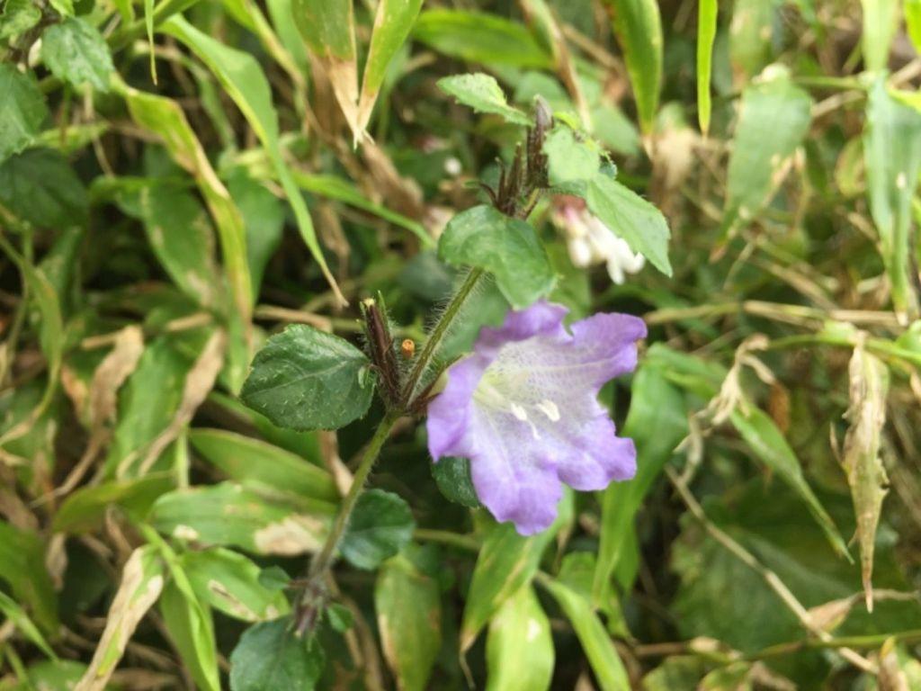 春在大屯連峰步道花兒朵朵開_296465