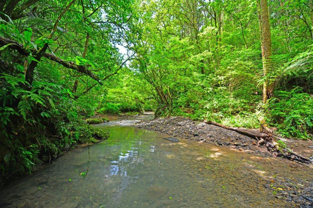 坪溪古道-走進綠色隧道的水地毯_1050423