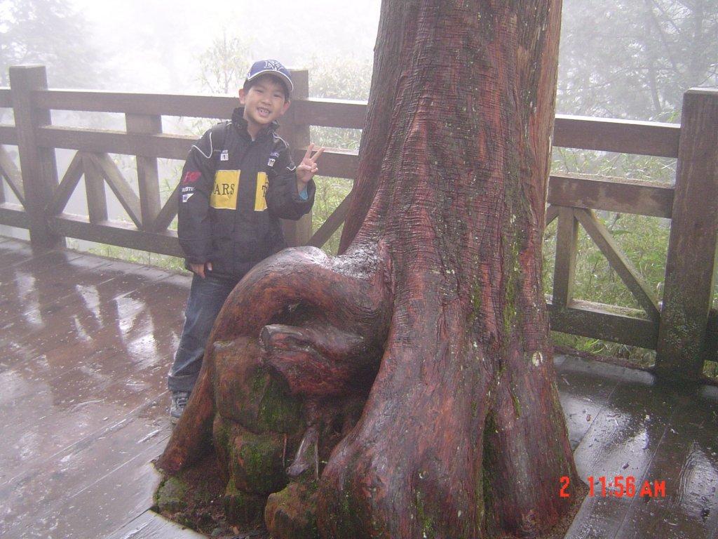 2008 May 阿里山步道_584686