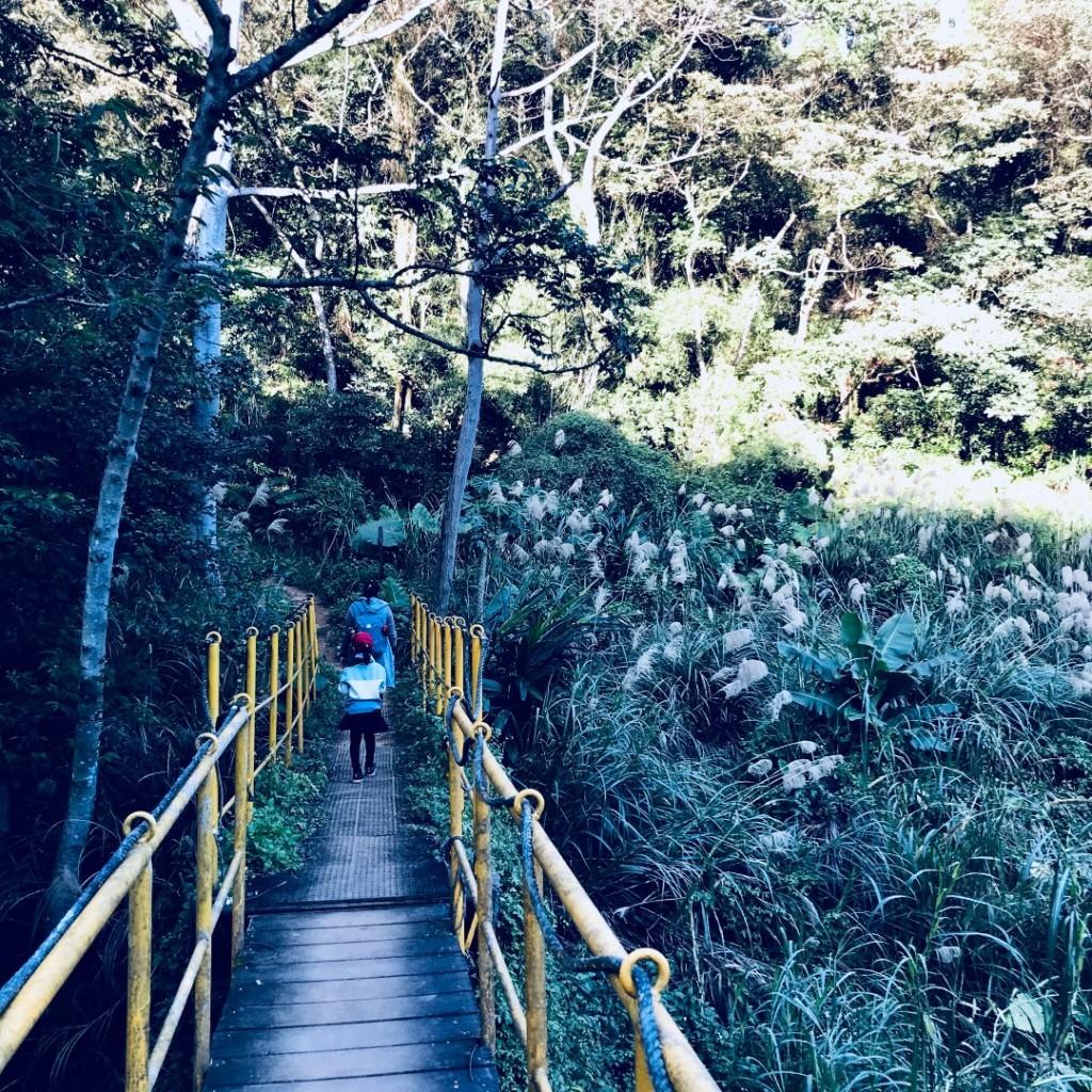 林口森林步道_251157