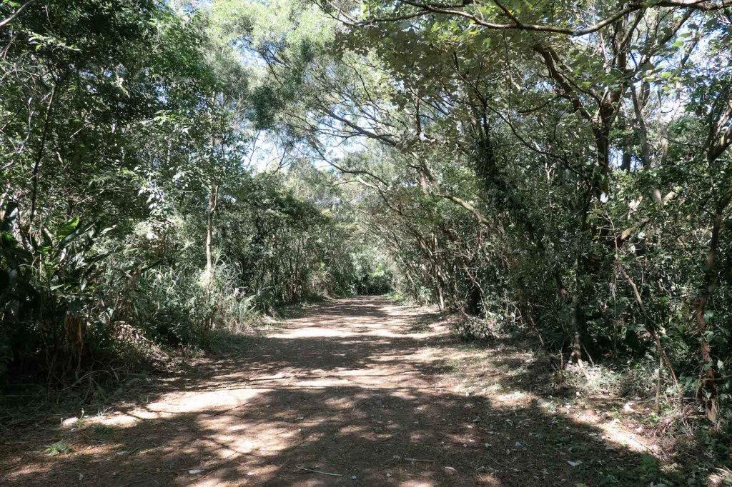 【台北大縱走第一段】輕鬆愜意的竹林與鄉村小徑_1362417