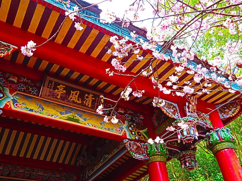 跟著花開去旅行:碧山巖櫻花及大溝溪花海_870204