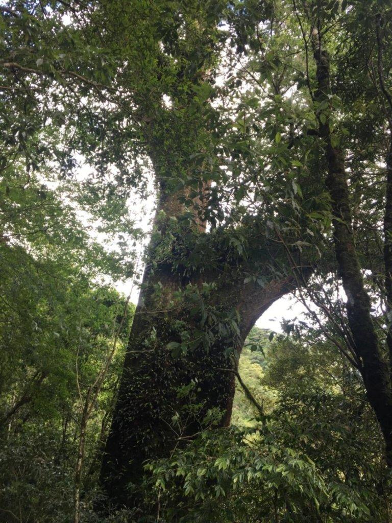 拉拉山自然保護區_624340