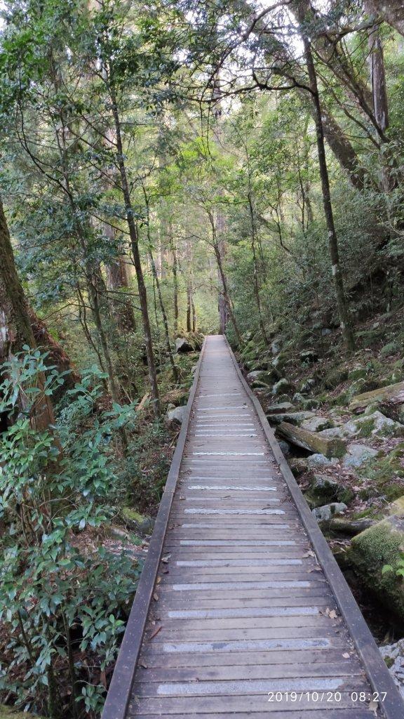 大雪山森林浴步道_715393