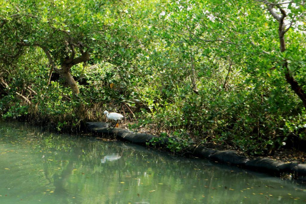 台灣亞馬遜河~四草綠色隧道_192405
