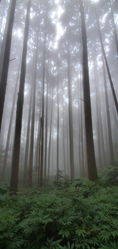 加里山登山步道_1325574