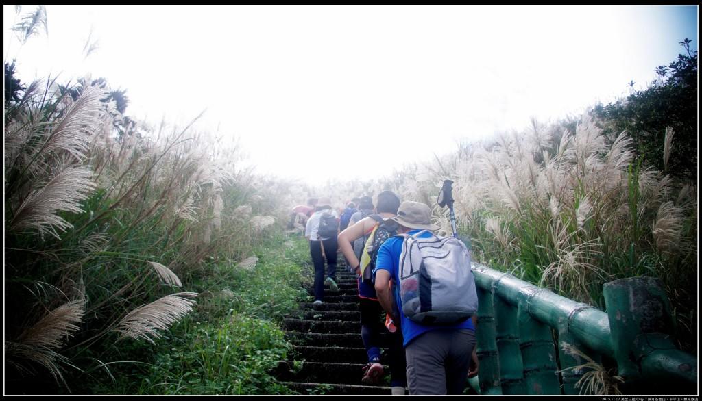 黃金三稜O行:無耳茶壺山、半平山、燦光寮_251329