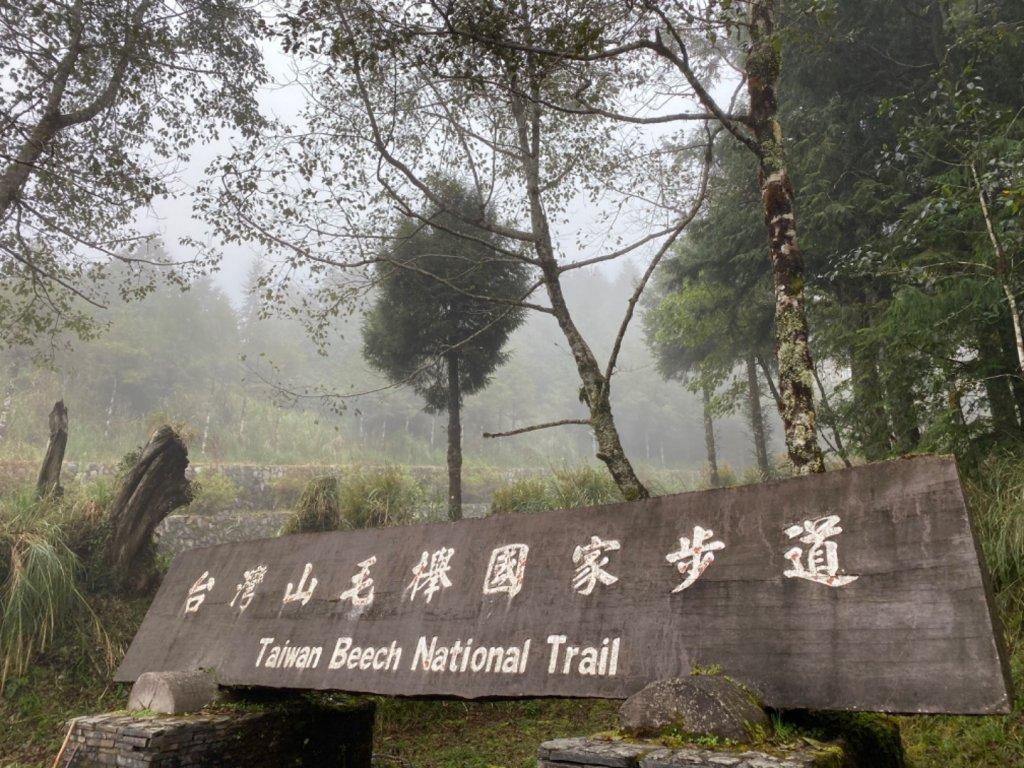 太平山 山毛櫸步道 霧氣金黃高氧量_742418