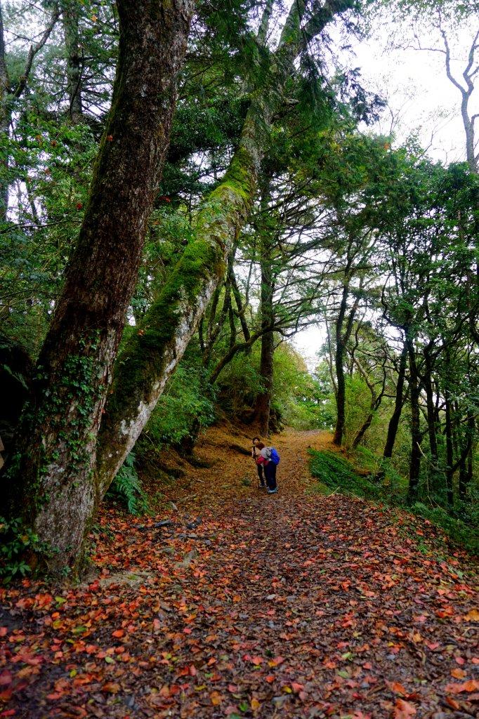檜山巨木森林步道_481493