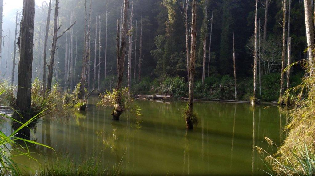 水漾森林_561473