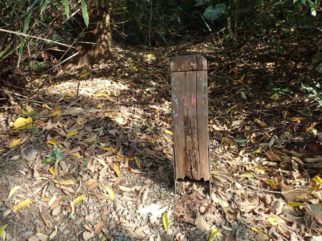 步道巡訪員│浸水營前段步道1月巡訪日誌_815027