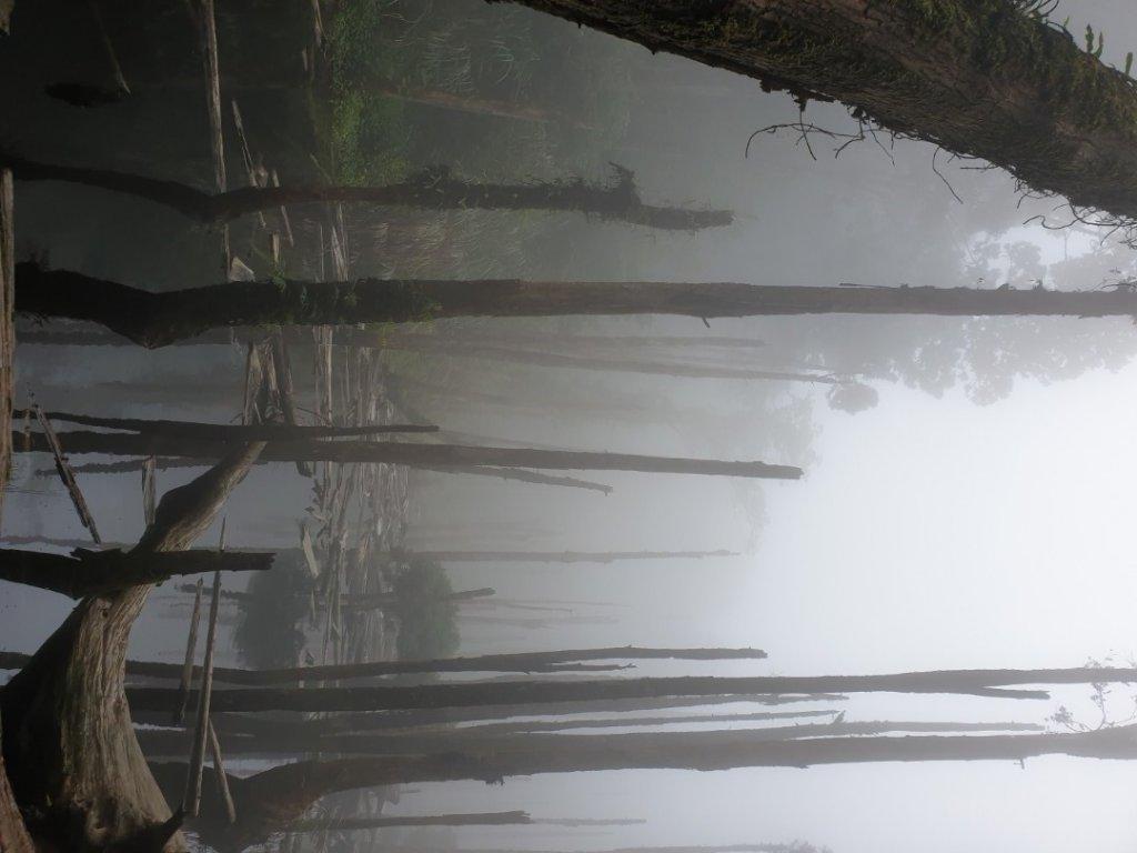 南鳳凰山-嶺頭山-忘憂森林-留龍頭_1032804