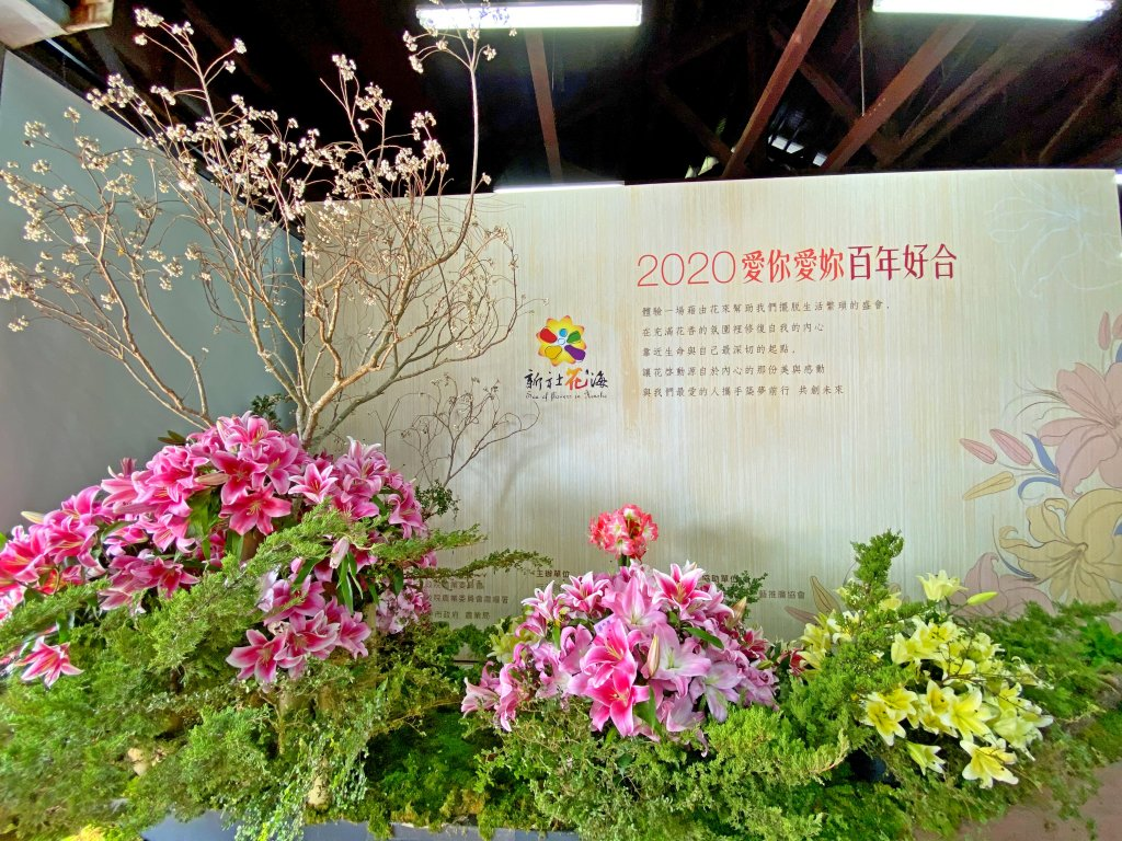 2020新社花海2020/11/17_1172639