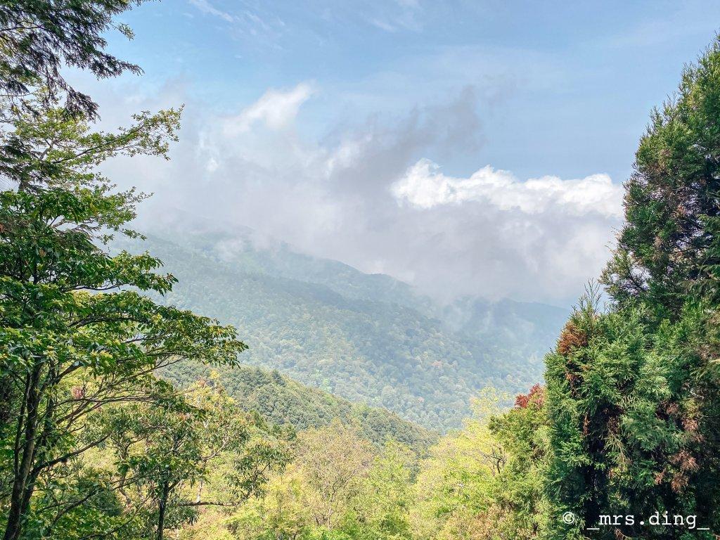<新竹>觀霧檜山巨木群步道(雪霸國_924567