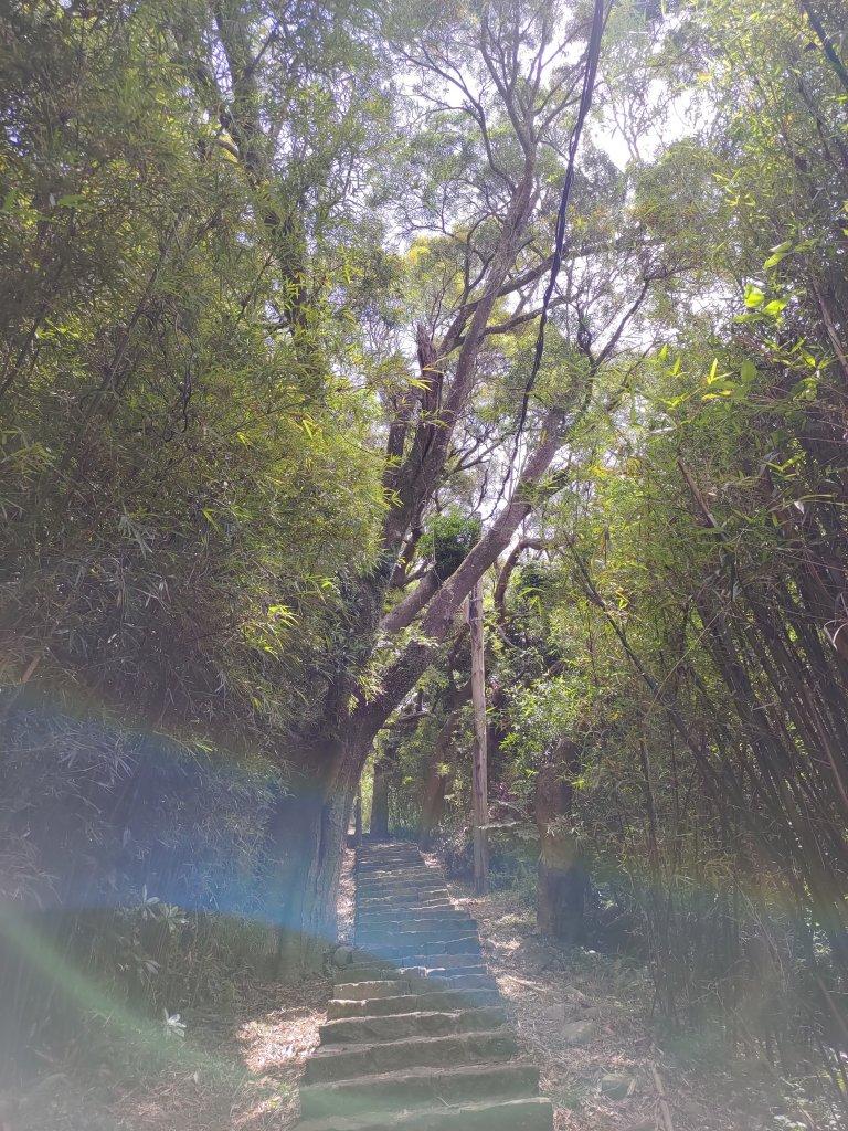 中正山步道-竹子湖來回_1361641