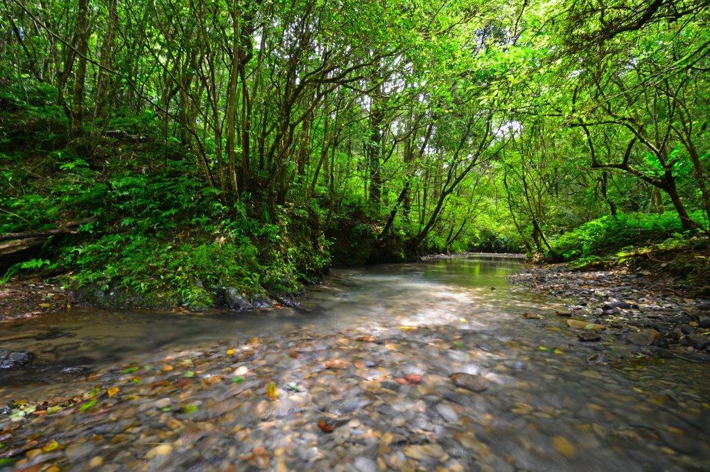 坪溪古道-走進綠色隧道的水地毯_1050410